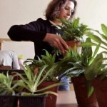 Wi-Fi waves can kill plants