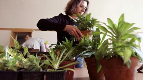 Wi-Fi waves can kill plants