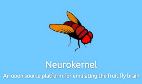 Looking for replicate collaborative form the functioning of the brain of a fly