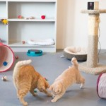 Petcube, spyware and play with your pet remotely